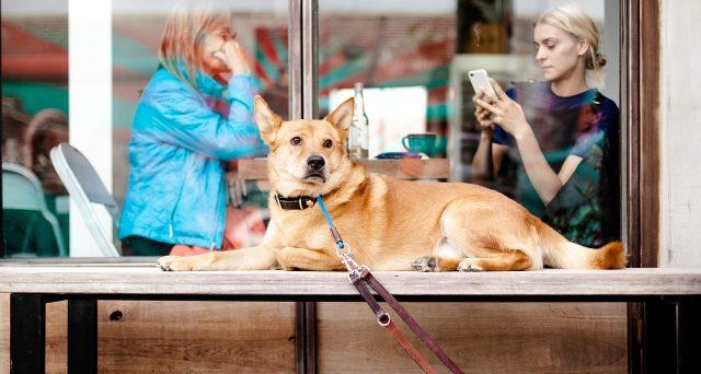 Arriva un'interessante opportunità di lavoro per amanti dei cani: 100 dollari all'ora per coccolarli al ristorante.