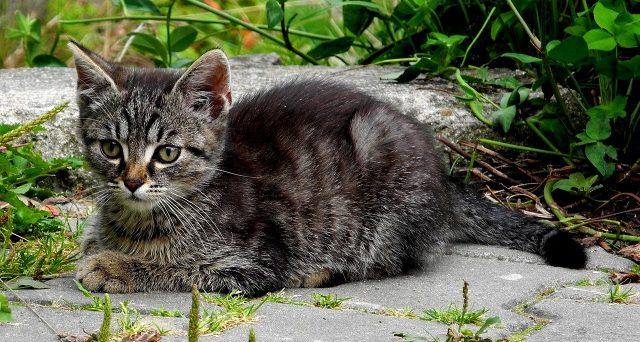 Il regolamento di condominio non può vietare di avere gatti in casa: ma quali regole e limiti valgono per le parti comuni dello stabile?