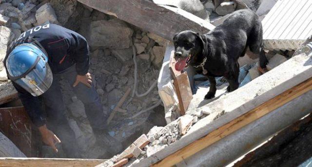 pensione-militari-cani