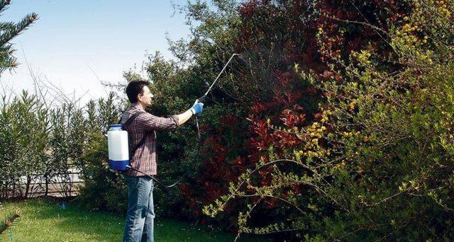 bonus-verde-zanzare-giardino