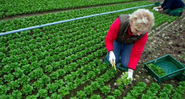 Dall'esenzione Irpef per i terreni agricoli e redditi dominicali al bonus donne in campo. Tutte le agevolazione previste per l'agricoltura nel 2020.