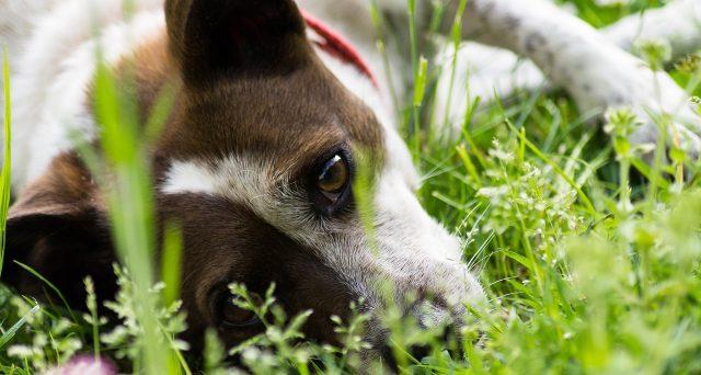 Seppellire animali domestici nel giardino del condominio: che cosa dice la legge e quali permessi servono.