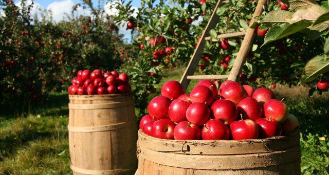 Grazie al decreto Cura Italia anche i prodotti agricoli ed alimentari DOP o IGP possono essere sottoposti a pegno rotativo