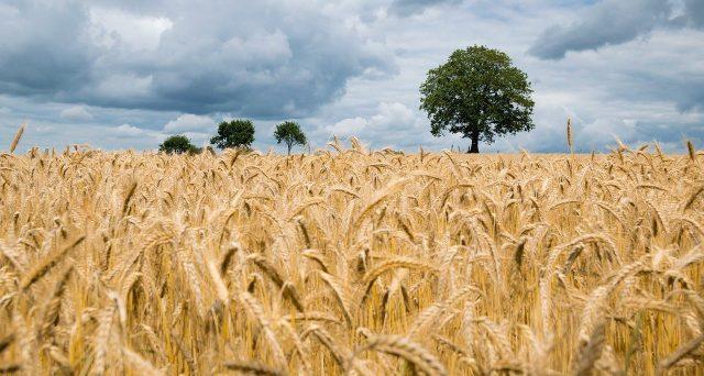 Ammessa l'IVA al 10% per la commercializzazione del Trinciato di Mais, Insilato di Mais e Pastone di Mais