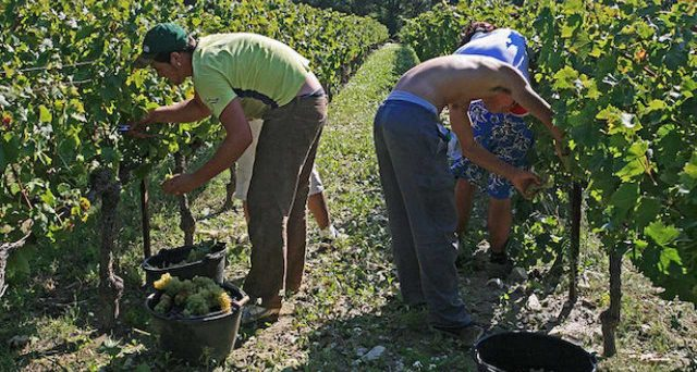 Esonero contributivo per i lavoratori agricoli dipendenti da imprese per i primi sei mesi del 2020. Prime indicazione in una circolare dell'Inps.