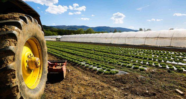 Approvati della Commissione Ue aiuti per 8,5 milioni di euro a favore delle cooperative agricole colpite dalla pandemia.