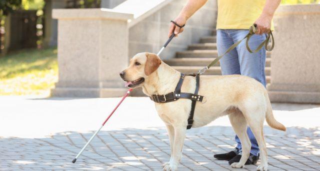 I non vedenti che intendono beneficiare della detrazione spese per i cani guida devono avere cura di conservare la documentazione attestante il possesso dell'animale.