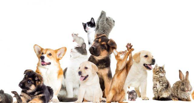 La Legge di Bilancio 2021 ha aumentato il tetto massimo di spese veterinarie detraibili a 550 euro.