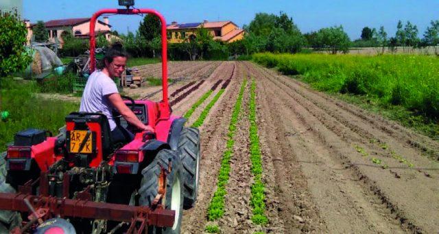 le aziende agricole chiedono lo sblocco degli sgravi contributivi previsti dalla legge e più flessibilità per assunzione di manodopera.