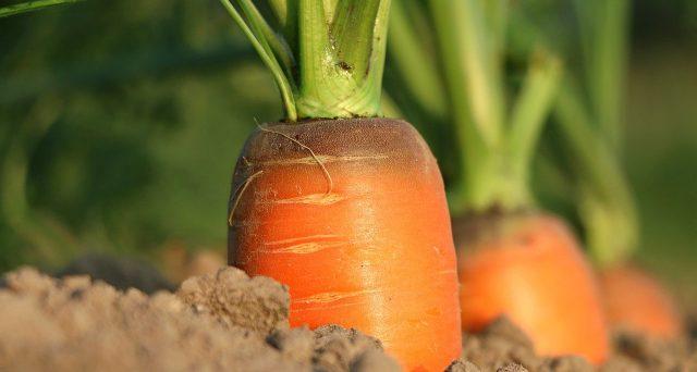 Anche per l'anno d'imposta 2021 il legislatore conferma alcune misure di favore per l'agricoltura
