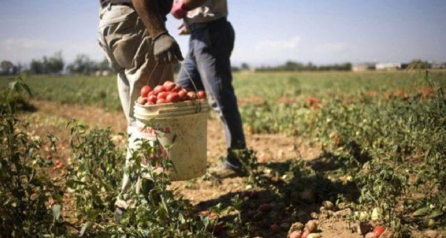 Nel Decreto Sostegni bis in fase di approvazione non dovrebbe mancare il Bonus lavoratori agricoli 2021.