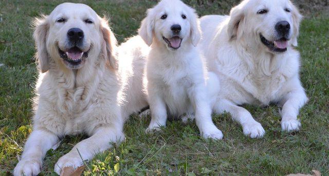 Detrazione acquisto e mantenimento cane guida: beneficiari, importi e limiti