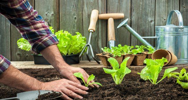 """""""Se sono pensionato e mi diletto a fare l'orto, posso chiedere il bonus verde?"""". Ecco un quesito pervenuto da un lettore alla redazione di Investire Oggi."""