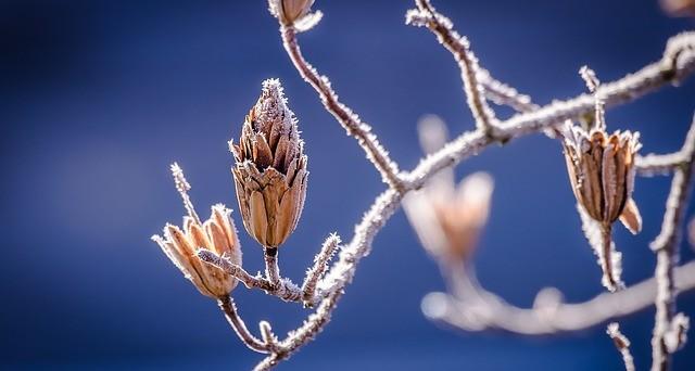 Torna il gelo: sono i tre giorni della merla