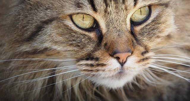 Febbraio: buona festa del gatto