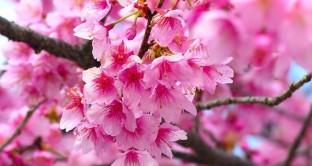 Oggi 20 marzo è l'inizio di primavera 2017: è arrivato quindi l'equinozio tra miti, celebrazioni ed eventi in Italia.