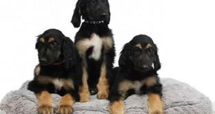 La clonazione animale non ha più limiti. È stato, infatti, riclonato in laboratorio un cane già clonato qualche tempo fa.