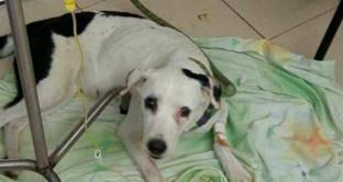 Muore Nube Viajera, il cane depresso che cercava il suo cattivo padrone