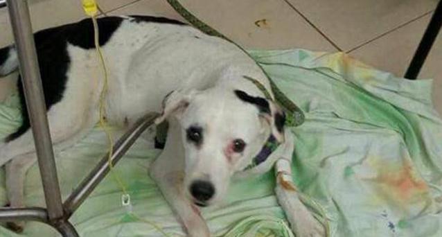 Si è lasciato morire Nube Viajera, il cane abbandonato in Colombia che ha commosso un'intera nazione. Era stato abbandonato due mesi fa.