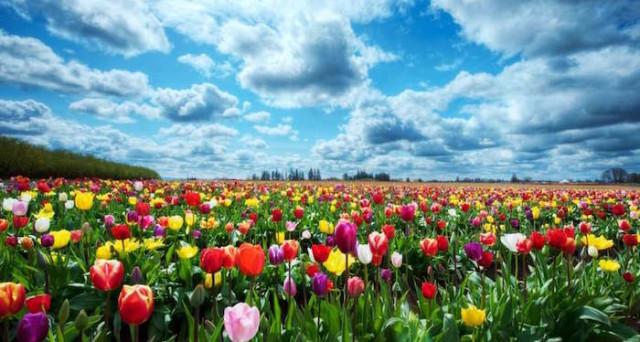 Il 20 marzo ci sarà l'Equinozio di primavera: significato e tante tradizioni nel mondo per celebrare l'arrivo della bella stagione.