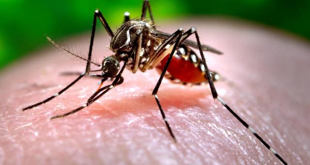 Che cos'è la Chikungunya: malattia virale trasmessa da zanzare infette della specie Aedes.