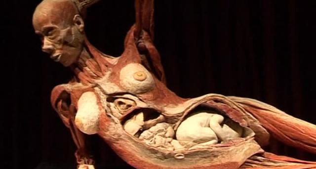 A Torino arriva la mostra dedicata al corpo umano che ha fatto scalpore in tutto il mondo, Human Bodies  The Exhibition.