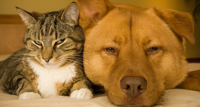 I Cani Sono Davvero Più Intelligenti Dei Gatti Investireoggiit
