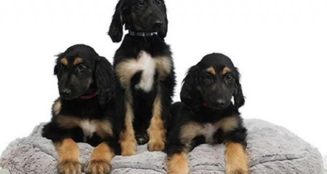 La clonazione animale non ha più limiti. È stato, infatti, riclonato in laboratorio un cane da uno già clonato qualche tempo fa.