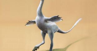 Scoperto il dinosauro-papera, ecco il fossile che ha stupito gli scienziati