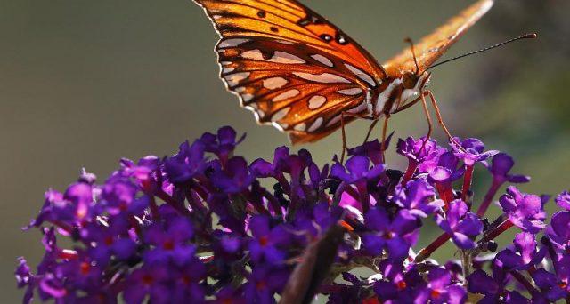 Popolazioni intere di insetti a rischio estinzione, i danni sulla natura sarebbero catastrofici.
