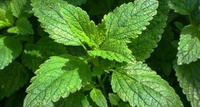 Alcune erbe aromatiche depurano l'organismo in modo naturale senza che vi sia bisogno di utilizzare delle sostanze chimiche: ecco le 5 più efficaci.