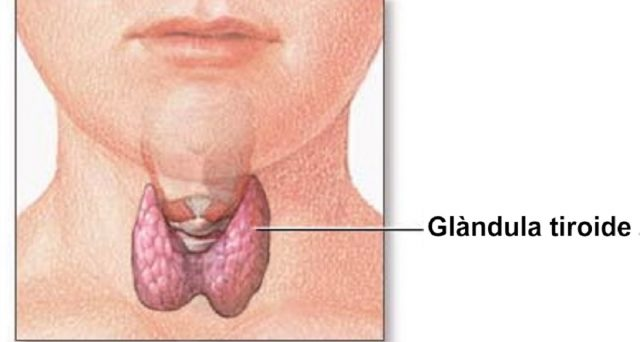 La tiroide è definita la