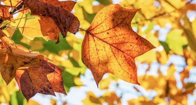 Equinozio d'autunno 2019, significato e data di quest'anno