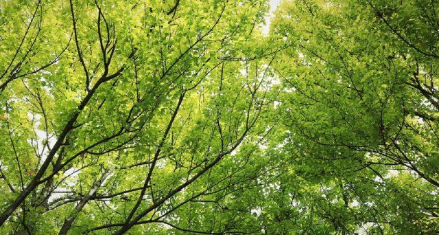 Oggi 21 novembre si festeggia la festa degli alberi e Lega Ambiente promuoverà tutta una serie di iniziative che dureranno fino al week-end.