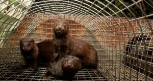 La notizia è stata diffusa dall'organizzazione animalista 'Essere Animali'