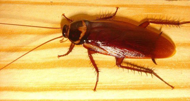 Amanti degli insetti? avete mai visto quali grossi? Ecco allora una lista di mostruosi insetti, degli alieni che vivono nel nostro mondo, in mezzo a noi. Ecco gli insetti già grandi del mondo. Insetti più grandi Coleotteri. Macrodontia cervicornis. Dynastes hercules. Insetto stecco. Mantide gigante asiatica. Lethocerus indicus. Blatta fischiante del Madagascar Weta gigante Farfalla […]