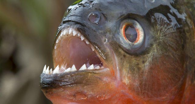 Quali sono i pesci più pericolosi del mondo? Ce lo dice questa classifica.