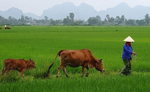 Il Vietnam cresce a ritmi elevati e investire nel paese non è più un azzardo. I bond sono speculativi, ma per gli analisti ci sono meno rischi