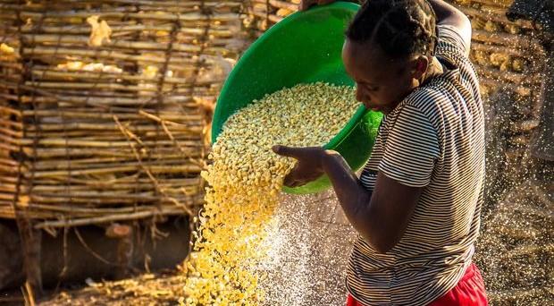 La Banca Mondiale (AAA) ha lanciato una obbligazione zero coupon a 3 anni in kwacha zambiani (XS1438124999)