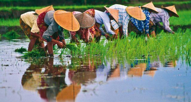 Opportunità d'investimento nel sud-est asiatico con particolare focus su Indonesia e Vietnam. Analisi degli esperti di NN Investment Partners