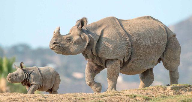 Le obbligazioni rinoceronti puntano alla conservazione della specie nera in Africa, ma presentano elevati rischi per come sono strutturati. Trattasi di bond