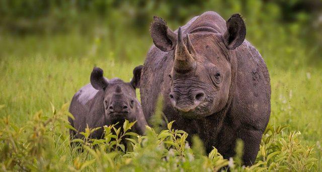 Bond rinoceronti della Banca Mondiale