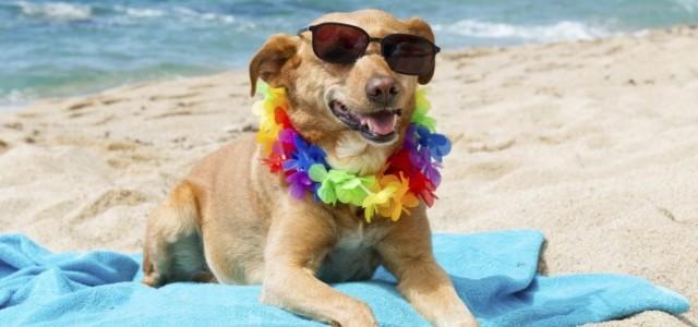 Cani e vacanze: ecco le migliori mete