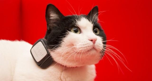 Ecco tutte le info su Vodafone Kippy, il GPS per cani e gatti ed il suo costo.