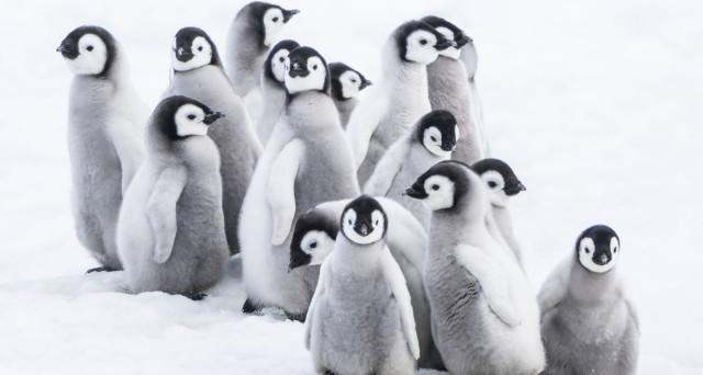 Sconti per i biglietti d'ingresso all'Acquario di Genova da oggi 24 febbraio 2017 per chi assisterà alla Marcia dei Pinguini-Il richiamo. Ecco le info.