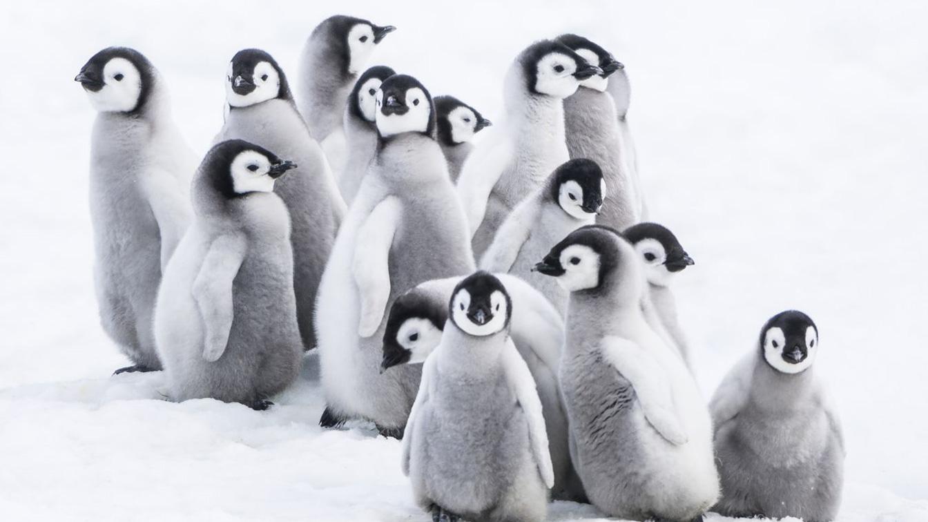 Offerte acquario di genova con la marcia dei pinguini il - Pinguini di natale immagini ...