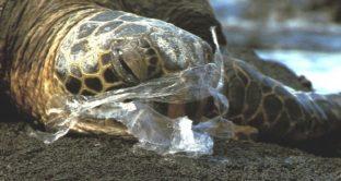 Ecco cosa propongono Lega Ambiente e Natura Si invece dei sacchetti compostabili: quelli riutilizzabili per risparmiare e preservare l'ambiente.