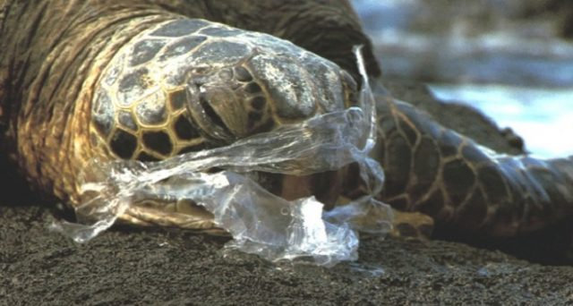 Arriva una nuova tassa sulla plastica dopo i sacchetti bio per frutta e verdura a pagamento? Pare proprio di si.
