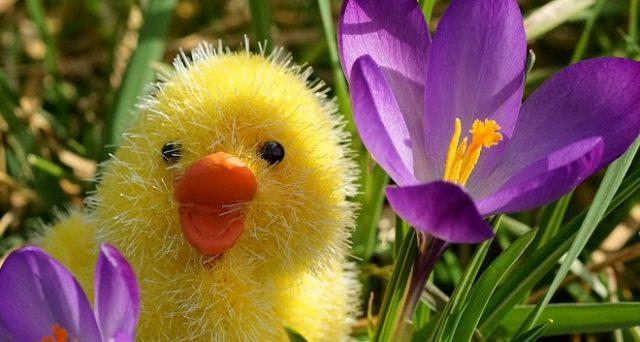 Ecco dove trovare immagini per una buona Pasqua 2018 da inviare gratis su WhatsApp e Facebook e le offerte viaggi low cost.