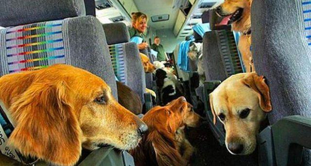 Volare con gli animali: ecco le regole di Alitalia, Ryanair e EasyJet con misure animale e trasportino e la documentazione da presentare per l'Italia, l'Unione Europea e gli Stati Uniti.